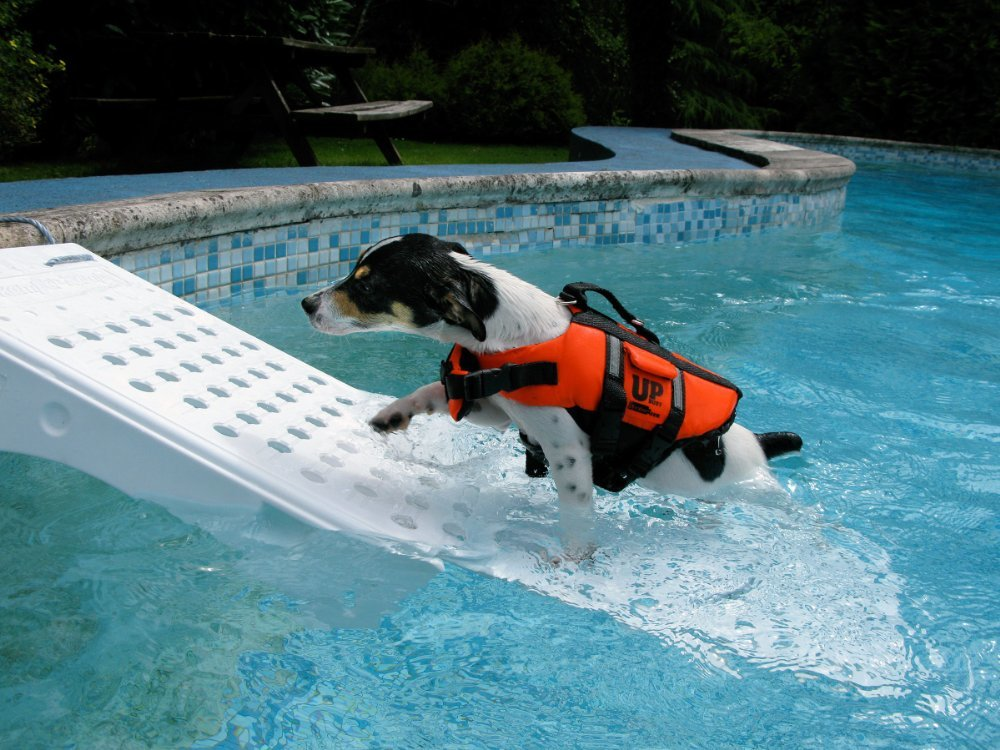 Dog Pool Ramps and Ladders for Your Pets | Best Above Ground ...