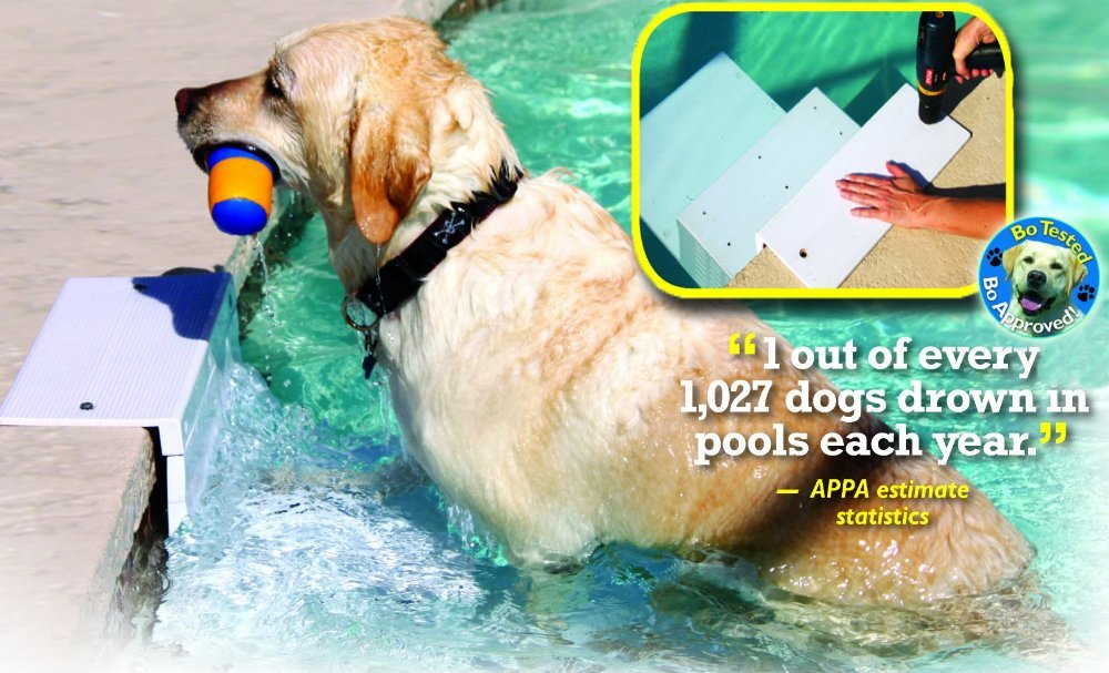 Paws Aboard Dog Ramp For Pools Best Above Ground Pools
